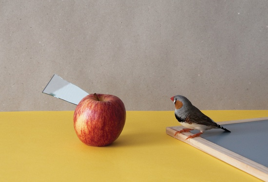 Bird with apple